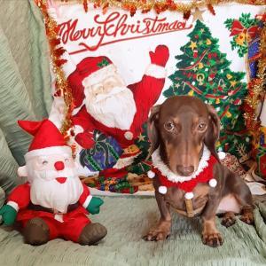 早めのクリスマスをお届け♪