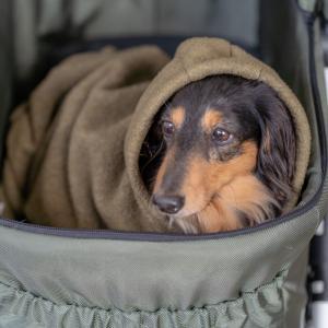 モデル犬マロ^^