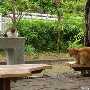 今日出会った猫たち