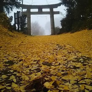 今朝の船岡神社