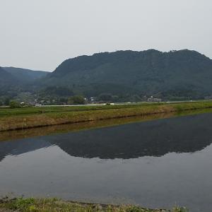 くす町も田植えの時期になりました。