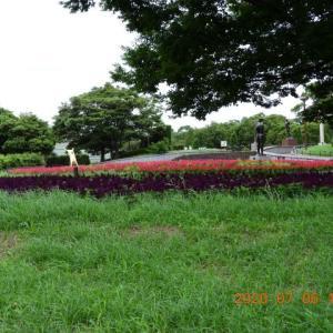 20200706-1  :  お散歩画像 青葉の森公園