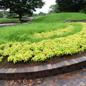 2020.07.13-3  :  お散歩画像 青葉の森公園