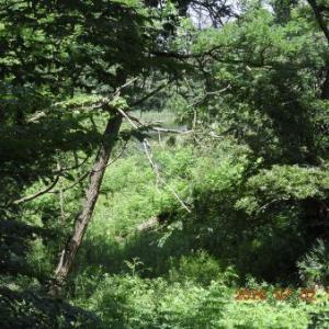 20200715-1  :  生態園の野鳥観察舎 まだまだ開きそうに有りません。
