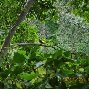 20201001-2  :  カワセミ カイツブリ カルガモ・青葉の森公園から