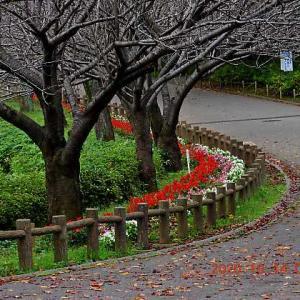 20201014-2  :  青葉の森公園 殆ど・カワセミ 他
