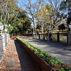 20201128-5 :  青葉ヶ池と 青葉の森公園
