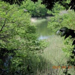 20210620-1  :  青葉の森公園内・生態園の舟田池 界隈
