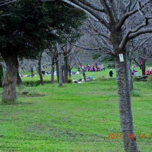 20211014-1  :  青葉の森公園から カワセミ 他
