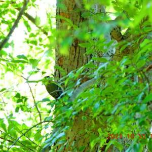 20211015  :  青葉の森公園から 沢山の小鳥に逢えましたが 余り撮れ無かったです。