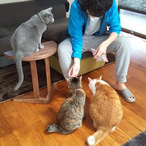 猫に囲まれた日
