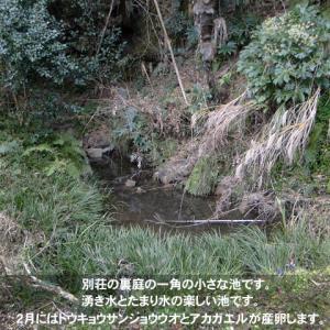別荘の池の整備