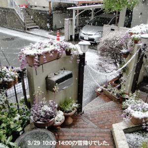 雪降り−・・・?