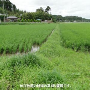 田んぼ周りの草刈り