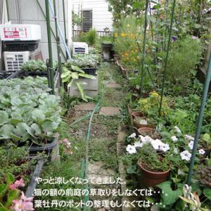 庭でのお仕事