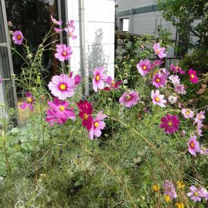 今日の園芸