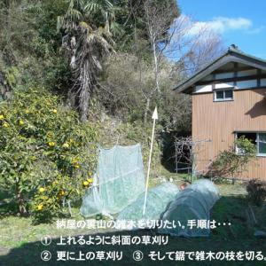 裏山の雑木を切る。