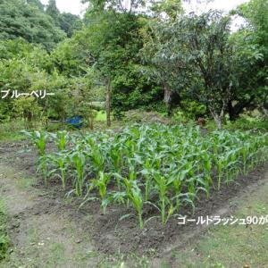 別荘菜園の記録