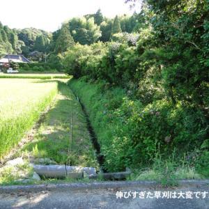 別荘草刈記録