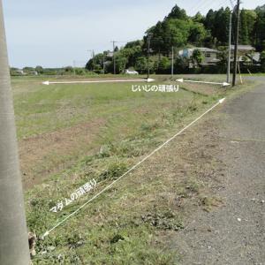 草刈りノルマ