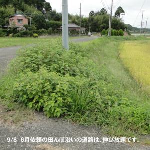 田んぼ沿い道路の草刈り