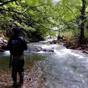 同じ渓でアマゴ・ヤマメ・イワナが釣れました。