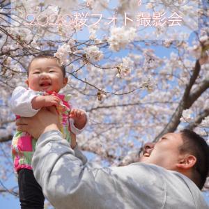 桜フォト撮影会!コロナウイルス感染症対策しながら無理なく行います