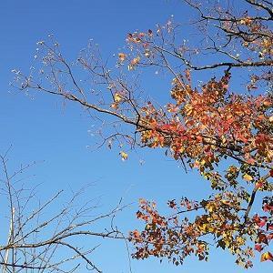 11月21日(木)の食事日記♪
