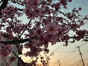 2月25日(木)の食事日記♪