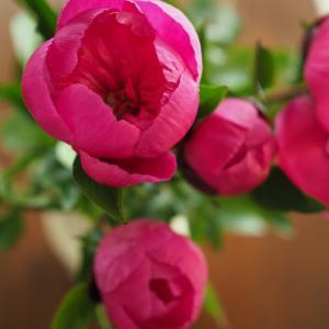 こんな時だからこそ、お部屋にお花を。次女の運動不足解消に、ついにとーさんが動き出した!