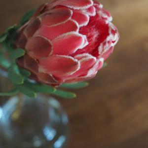 スーパーのお花屋さんで思いがけずオシャレなお花に出会えた!