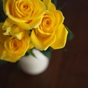 ホワイトデーにもらった黄色い薔薇。その驚きの花言葉とは?!