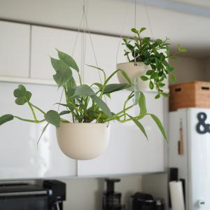 初めて購入したプラントハンガー。植物の飾り方の幅が広がりました!
