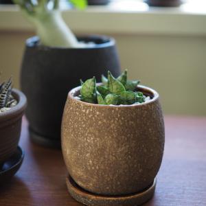 素敵な鉢に植え替えて、植物のビジュアルが格段にアップした!そして、スーパーセールポチレポ。