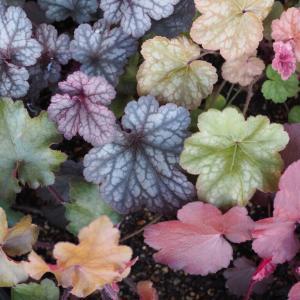 気になっていたグリーンショップに行ってみました。カラフルな植物達にうっとりしてます!