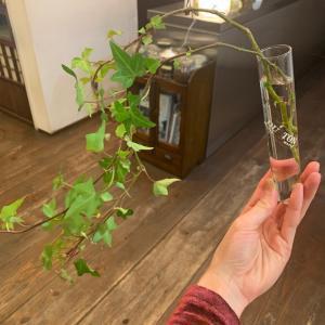 観葉植物のプレゼント
