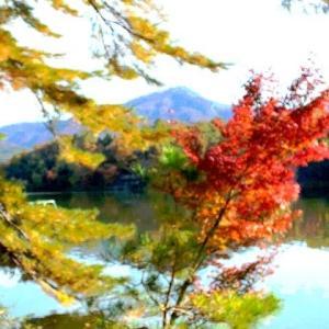 観光客のいない静かな公園があった 宝ヶ池公園:京都府京都市