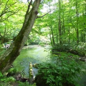 この風景が観たくって・・・ 奥入瀬・酸ヶ湯:青森県十和田市・青森市
