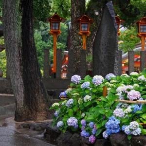雨のち晴れ・散歩道の紫陽花 & 外付けHDD故障中