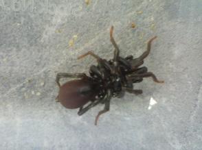 【No.0048】散歩して見つけた土蜘蛛・・・