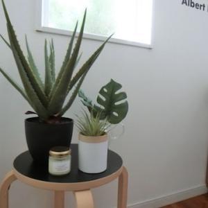 IKEAの鉢カバーで清涼感UP!のグリーンコーナー