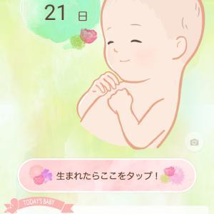 正産期!&臨月の記録
