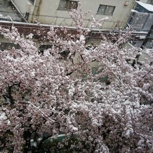 久しぶりの雪ーIn Tokyo