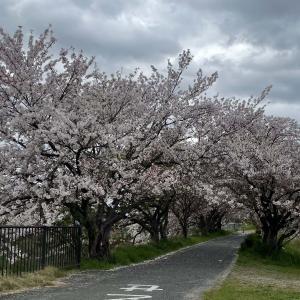 大阪の春はそろそろ終わりかけ