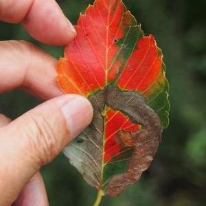 色鮮やかな葉っぱ