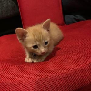 猫を飼い始めました