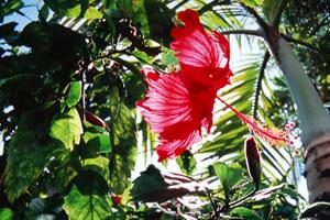 紅の南の花