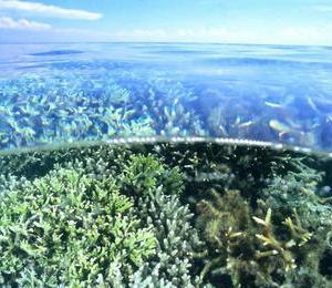 素晴らしいサンゴ礁