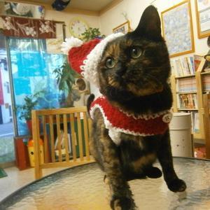 とうとうクリスマス