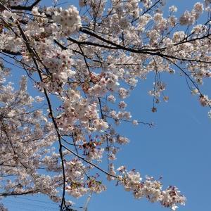明日は咲こう、来年咲こう。